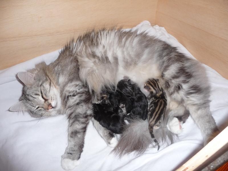 Unsere zwei Katzen Arwen und Padme Padme